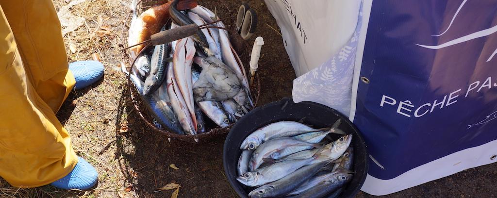 Produits de la pêche