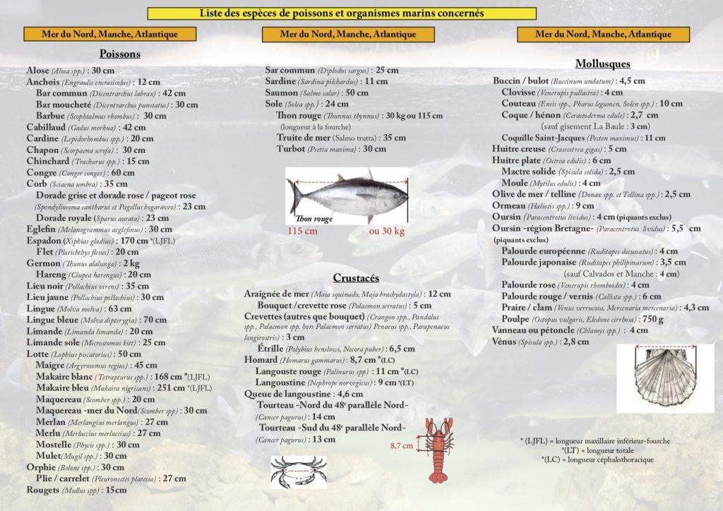 Liste des mesures des poissons