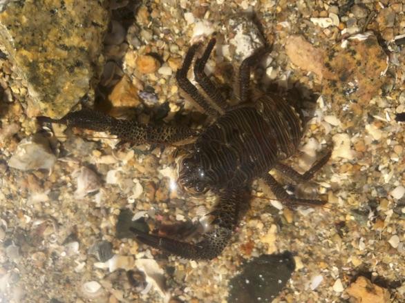 Scorpion mâle rencontres cancer femelle ENTP conseils de rencontres